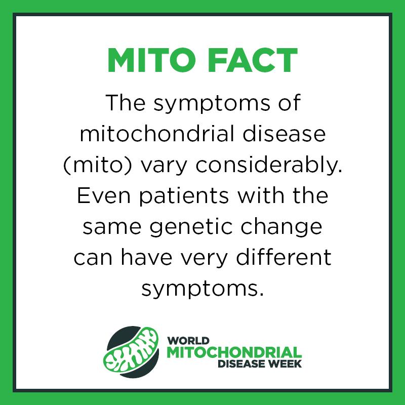 Mito Facts4