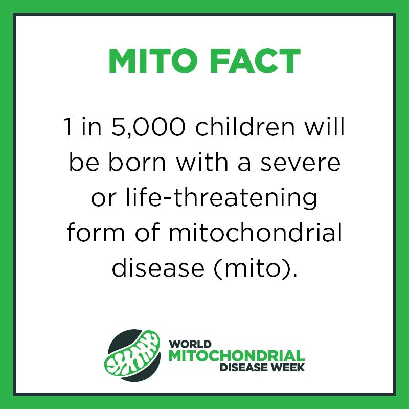 Mito Facts5